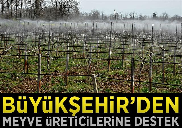 Büyükşehir'den meyve üreticilerine destek
